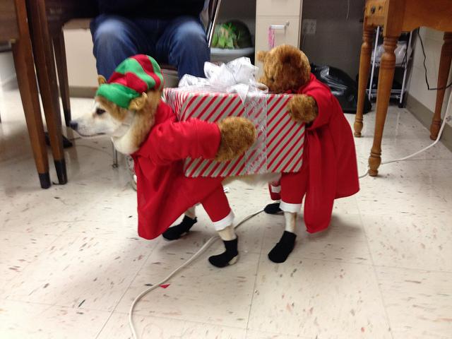 Cool Dog Costumes photo - 1