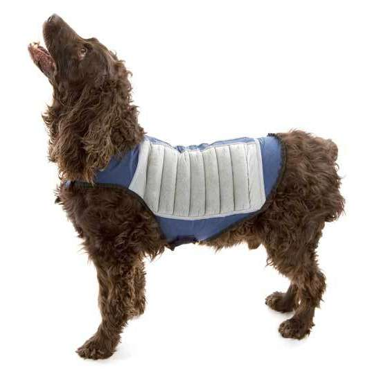 Cool Dog Jackets photo - 1
