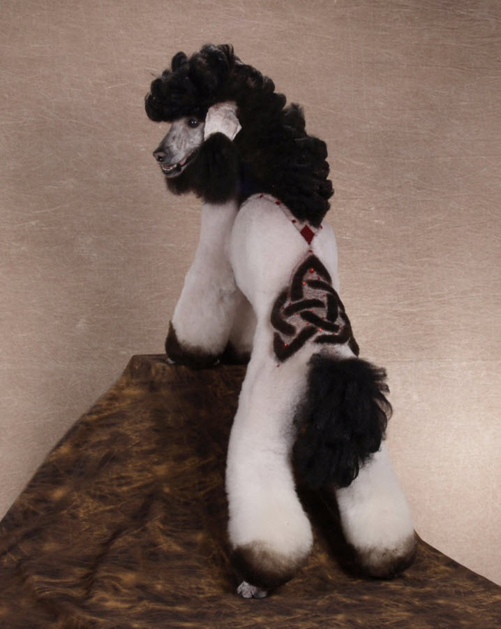 Cool Poodle Haircuts photo - 3