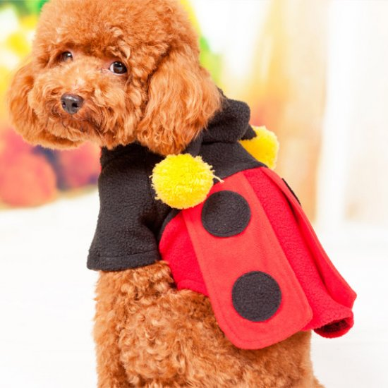 Cute Dog Clothes For Small Dogs photo - 3