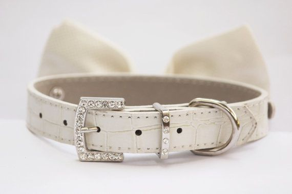 Cute Dog Collars photo - 1