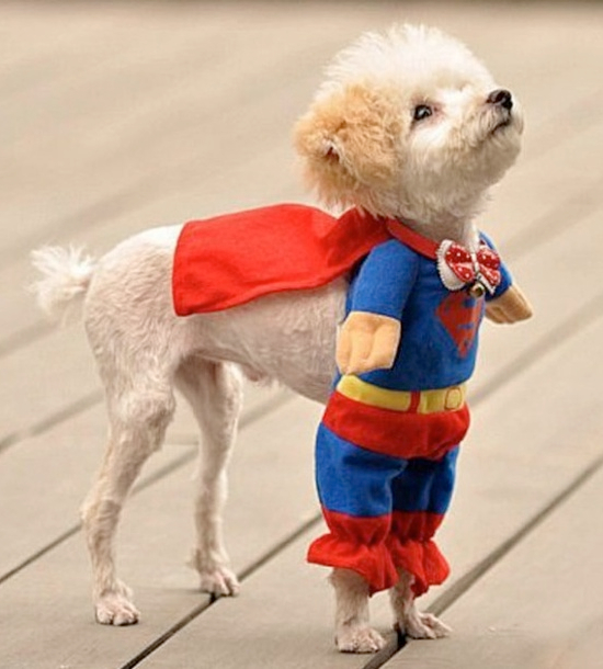 Cute Dog Costumes photo - 1