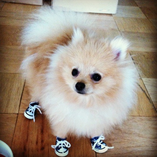 Cute Dog Shoes photo - 3