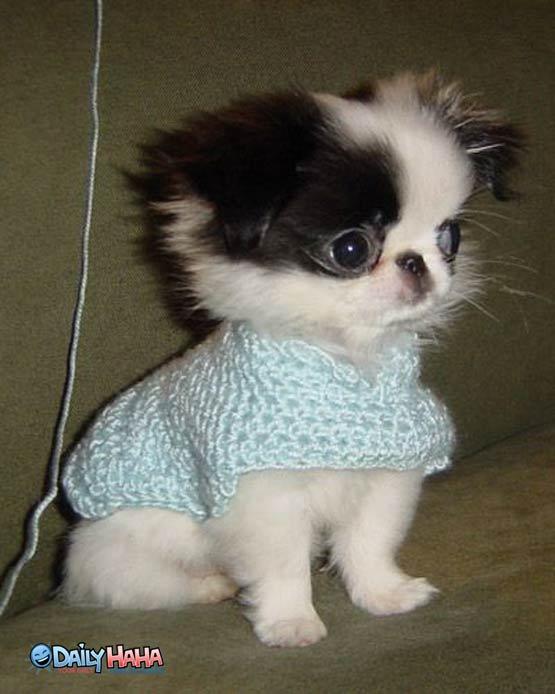 Cute Dog Sweaters photo - 3