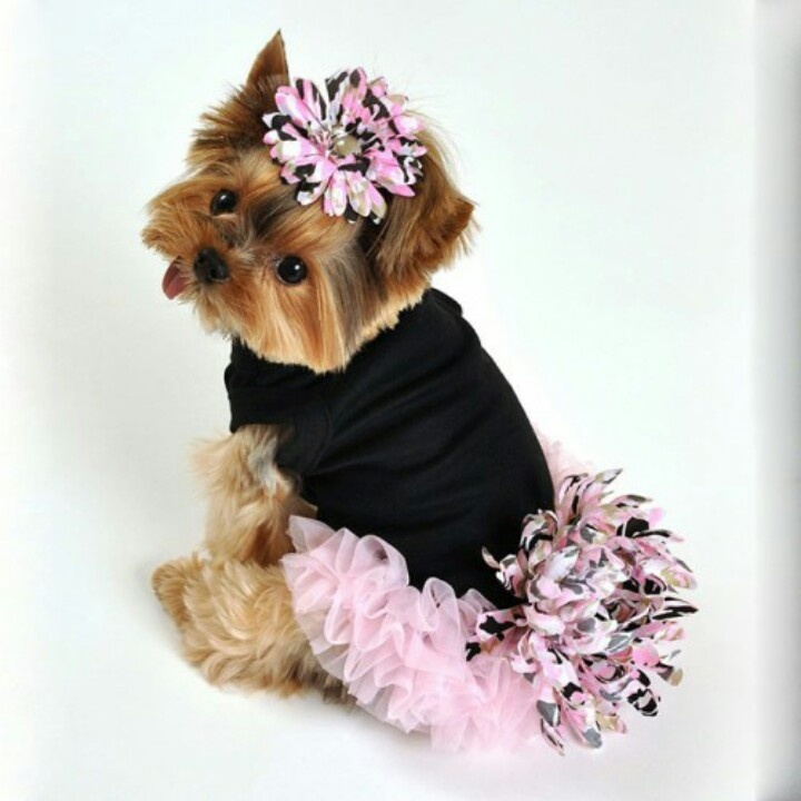 Cute Girl Dog Outfits photo - 1