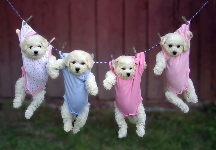 Cute Puppies In Clothes photo - 1