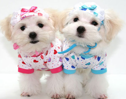 Cute Puppies With Clothes photo - 3