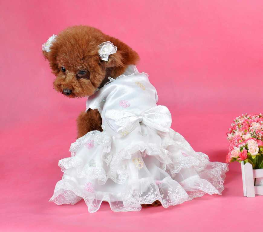 Cute Puppy Dresses photo - 2