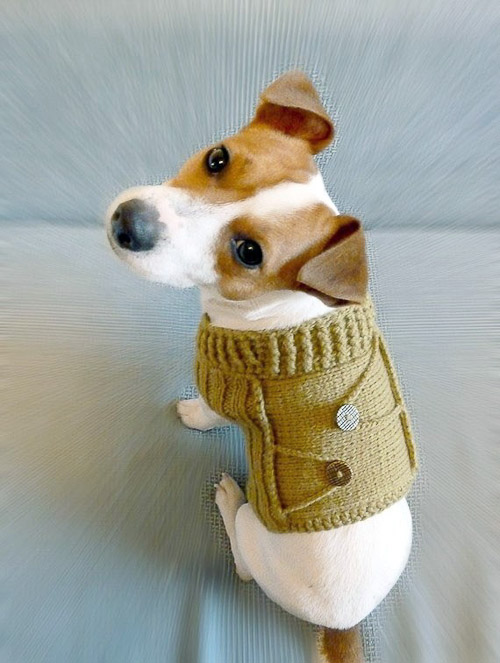 Cute Sweaters For Dogs photo - 2