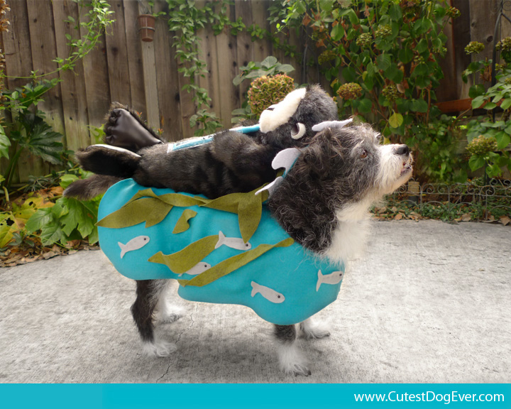 Cutest Dog Costumes photo - 1