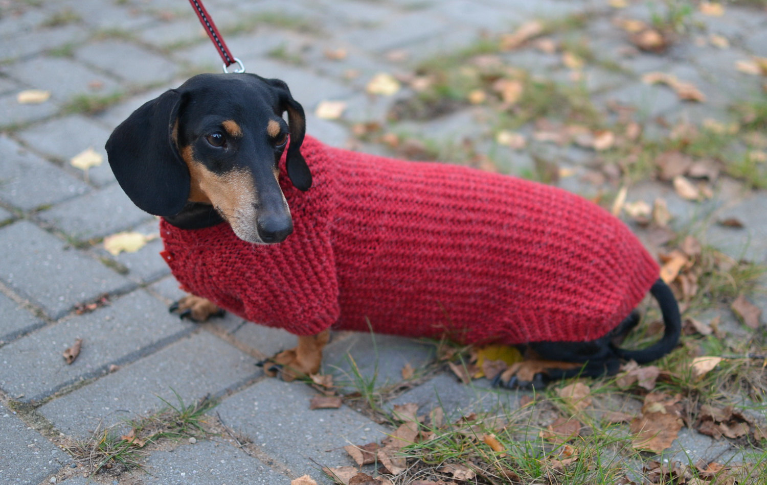 Dachshund Clothes For Dogs Dress The Dog Clothes For Your Pets