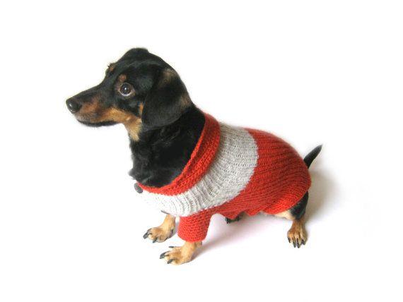 Dachshund Dog Clothing photo - 1