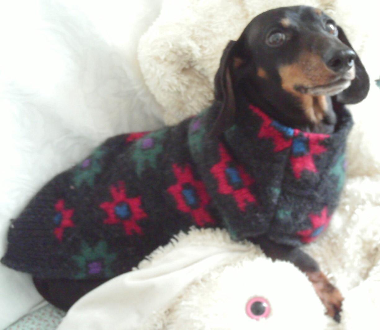 Dachshund Dog Coats And Sweaters photo - 1