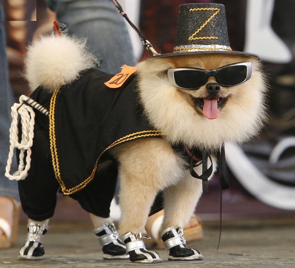 Designer Dog Costumes photo - 1