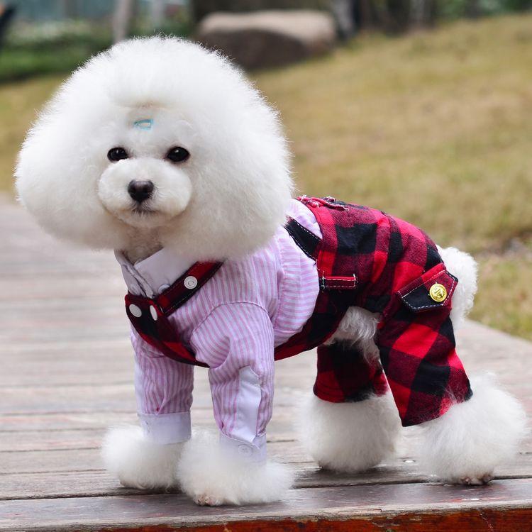 Dog Apparel photo - 1