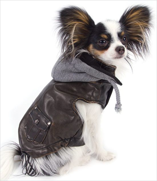 Dog Bomber Jacket photo - 1