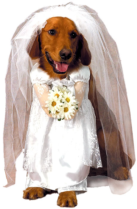 Dog Bride Costume photo - 1