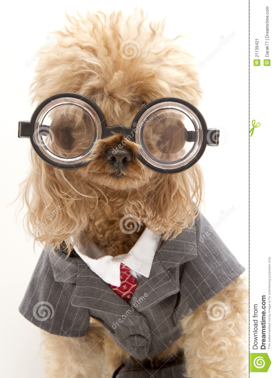 Dog Business Suit photo - 2