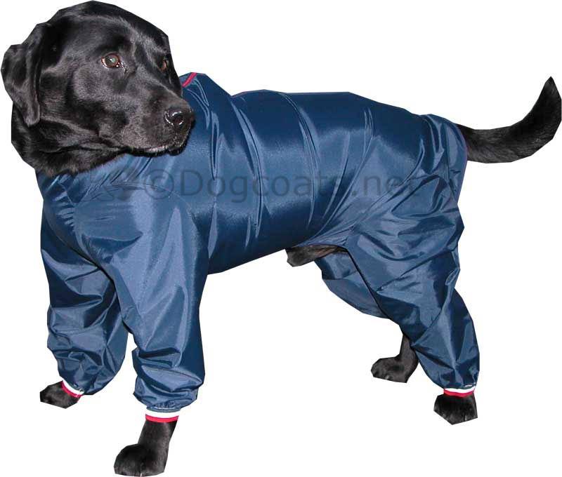 Dog Caots photo - 1