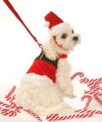 Dog Clothes Christmas photo - 1