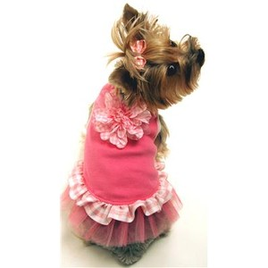 Dog Clothes For Small Dogs photo - 1