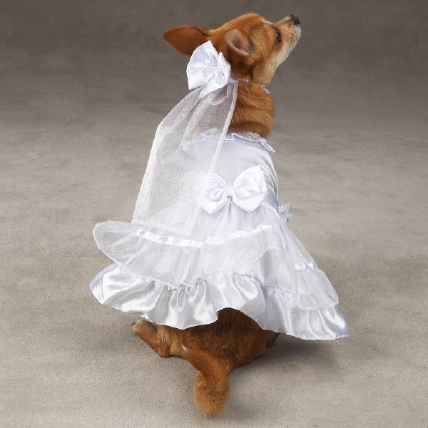 Dog Clothes For Wedding photo - 1