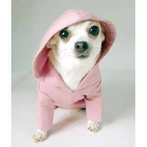 Dog Clothing For Small Dogs photo - 3