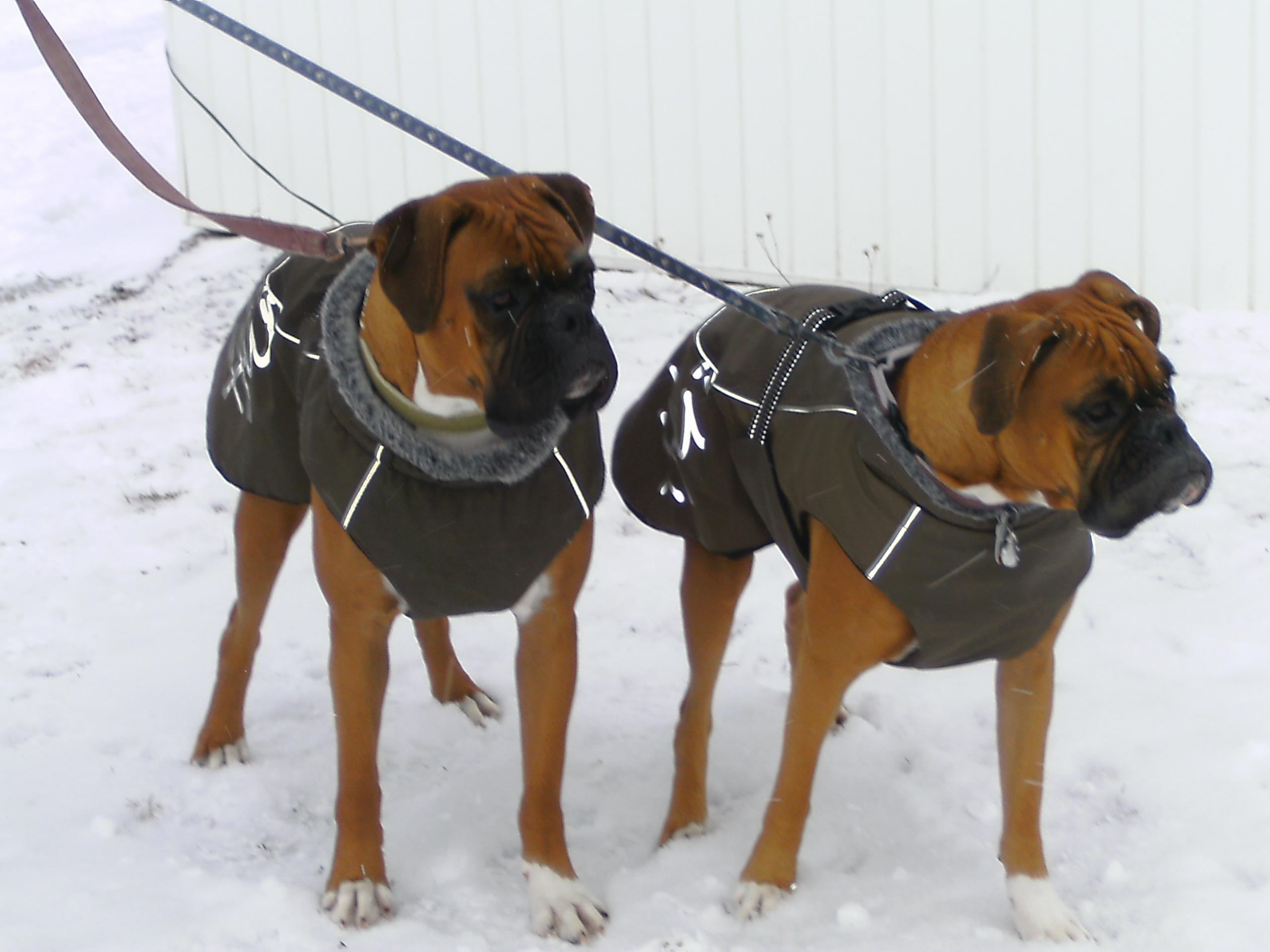 Dog Coat For Boxer photo - 1