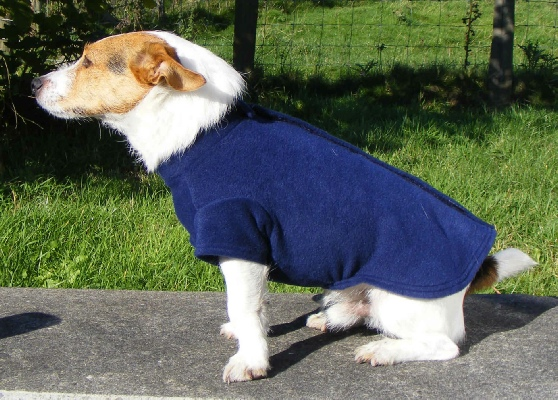 Dog Coats And Jumpers photo - 1