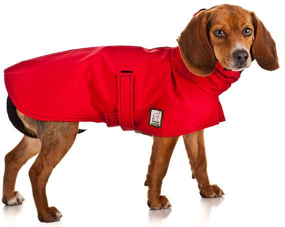 Dog Coats For Beagles photo - 1