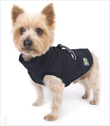 Dog Coats For Chihuahuas photo - 1
