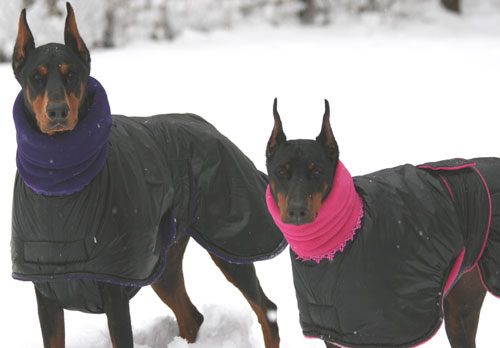 Dog Coats For Dobermans photo - 1