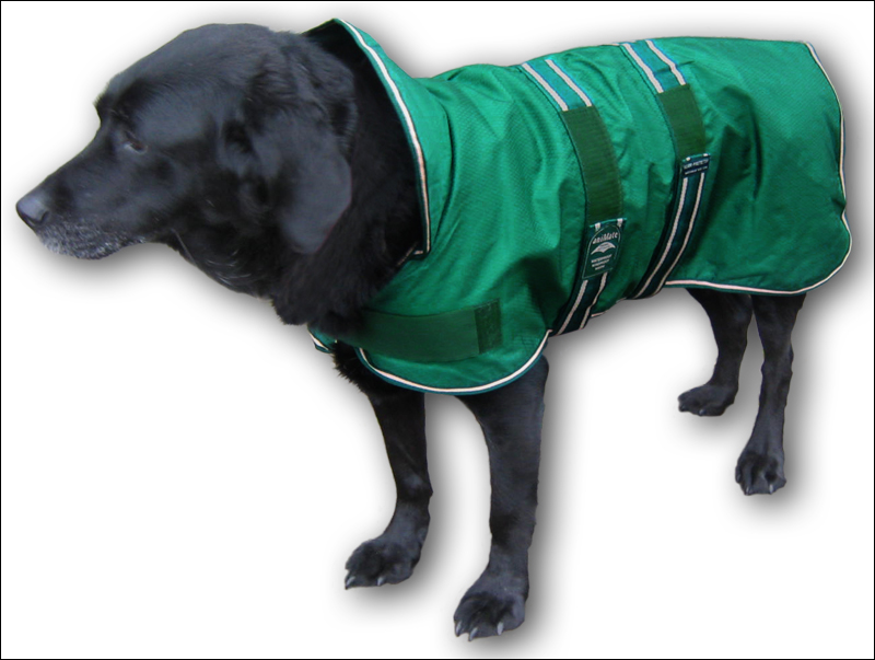 Dog Coats For Labradors photo - 1