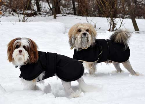 Dog Coats Small photo - 1
