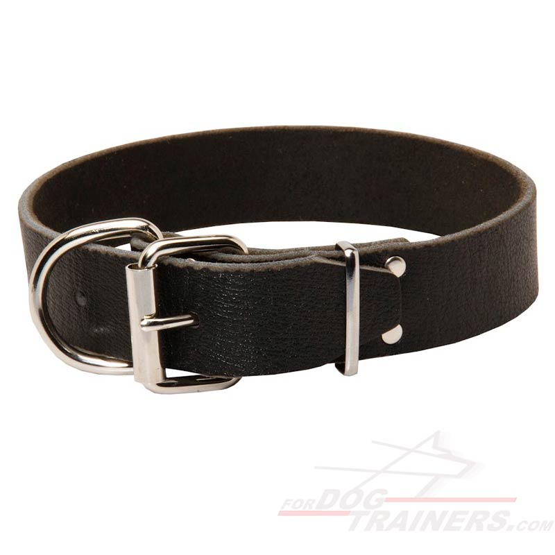 Dog Collars photo - 1