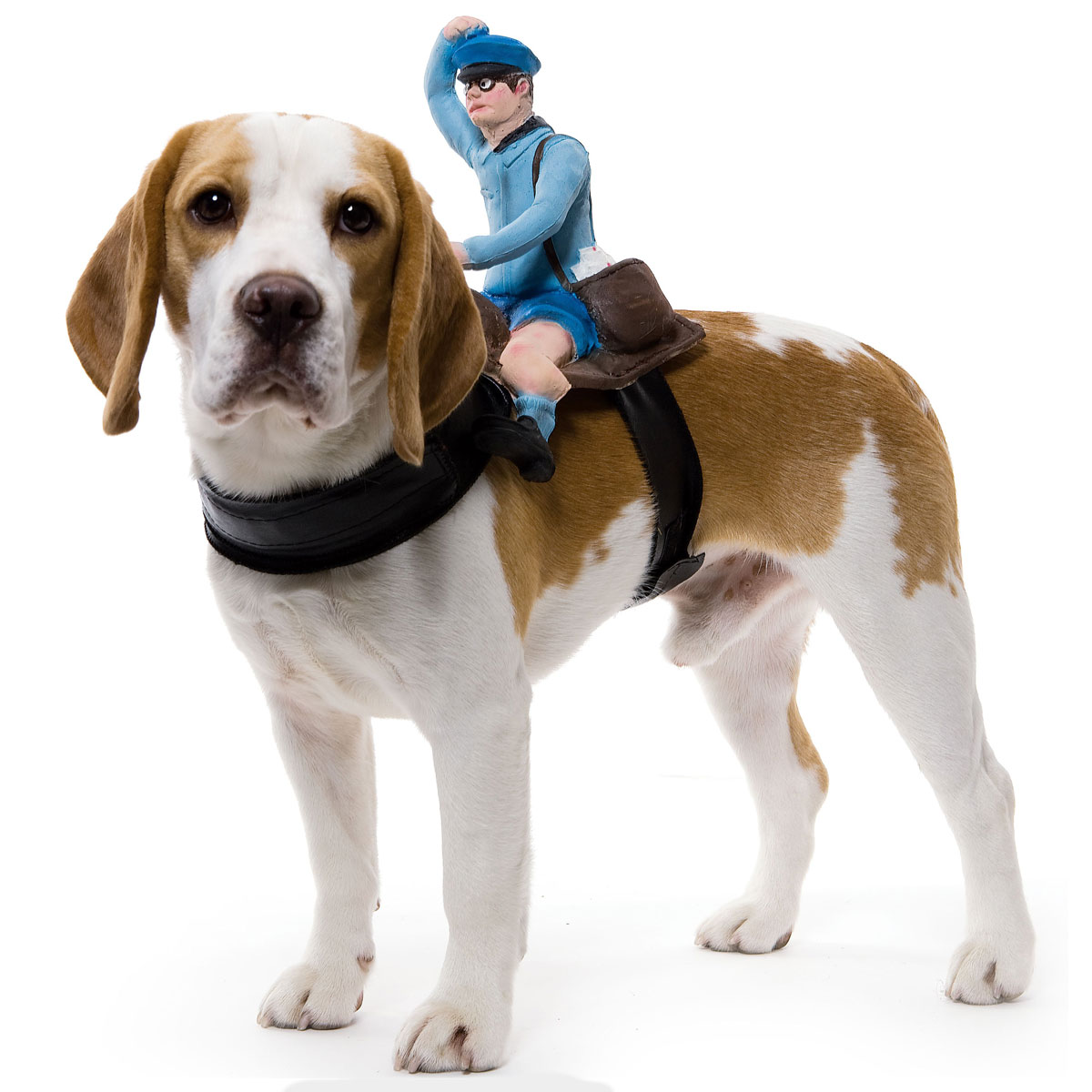 Dog Costume photo - 1