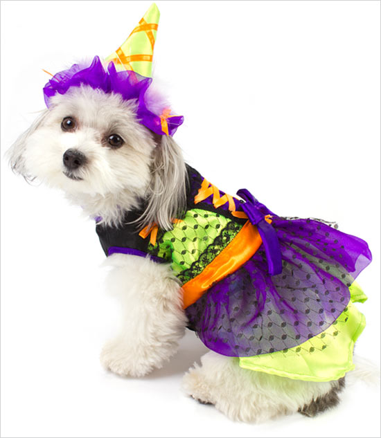 Dog Costumes For Small Dogs photo - 3