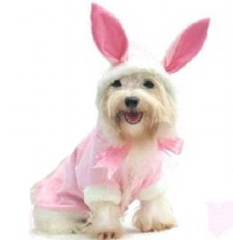 Dog Easter Outfit photo - 1