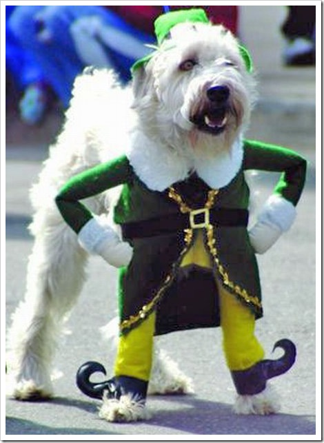 Dog Elf Outfit photo - 1