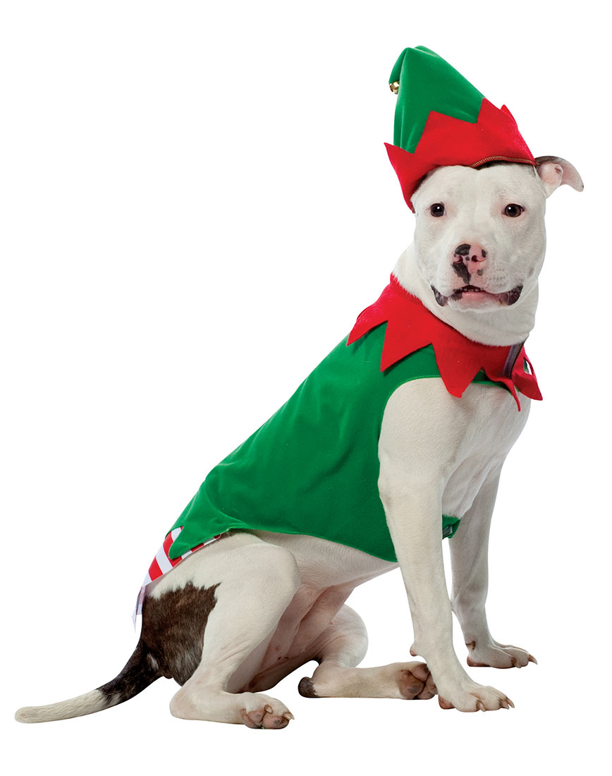 Dog Elf Suit photo - 3