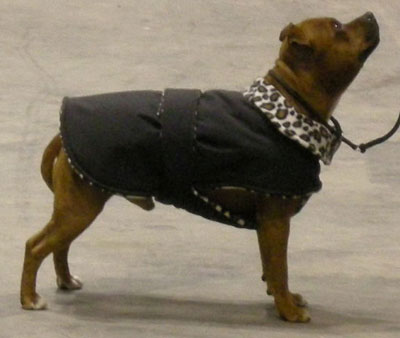 Dog Fleece Coat Pattern | Dress The Dog - clothes for your pets!