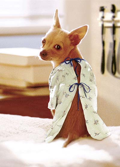 Dog Gown photo - 1