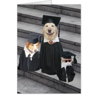 Dog Graduation Outfit photo - 1