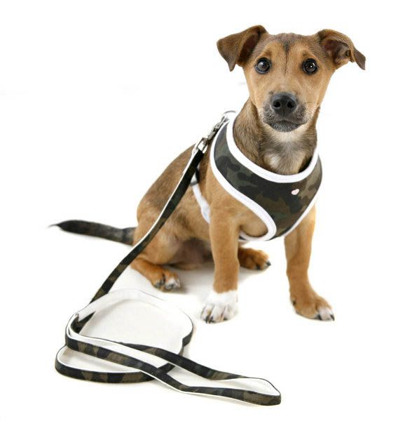 Dog Harness photo - 1