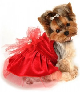 Dog Holiday Outfits photo - 1