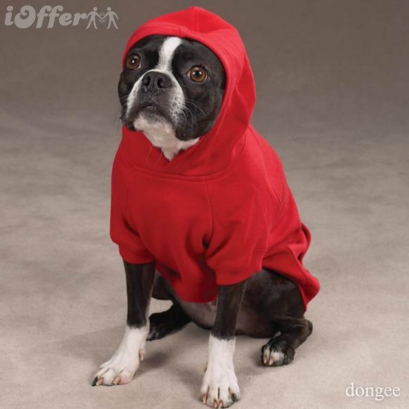 Dog Hoodies For Pitbulls photo - 1