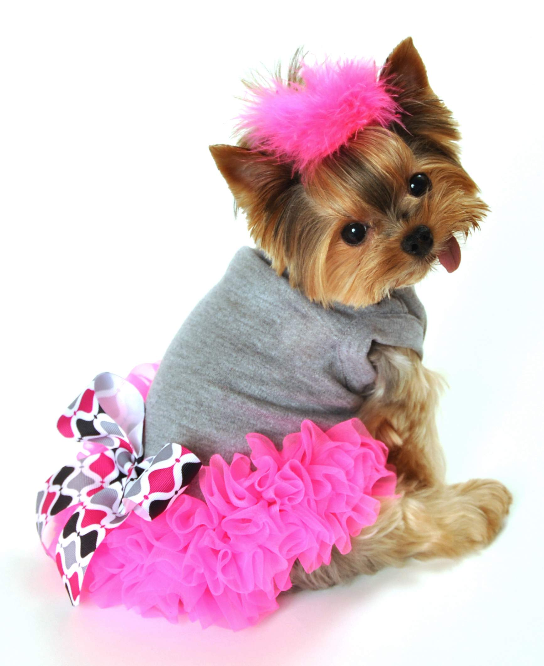 Dog In A Dress photo - 1