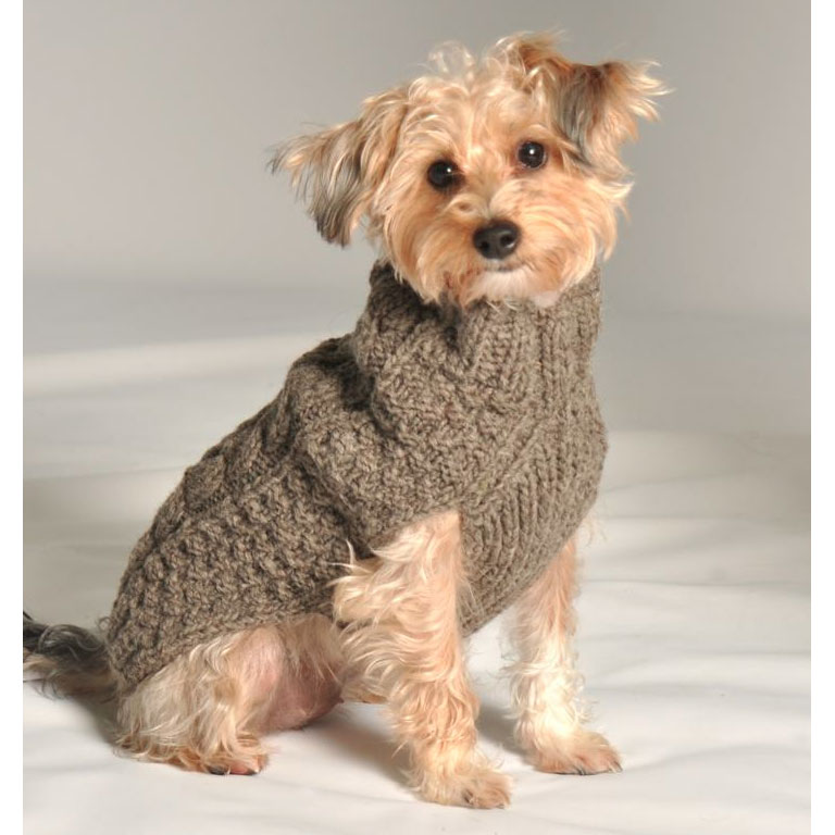Dog In A Sweater photo - 2