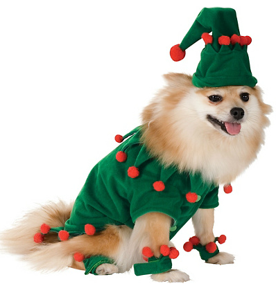 Dog In Christmas Costume photo - 1