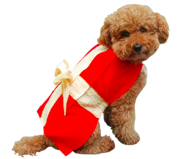Dog In Christmas Outfit photo - 1